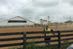 horses_jefferson_county_west_virginia_fairgrounds-e1499271233168